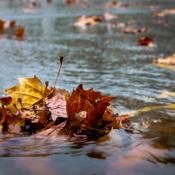 October Sample: Fall Colors